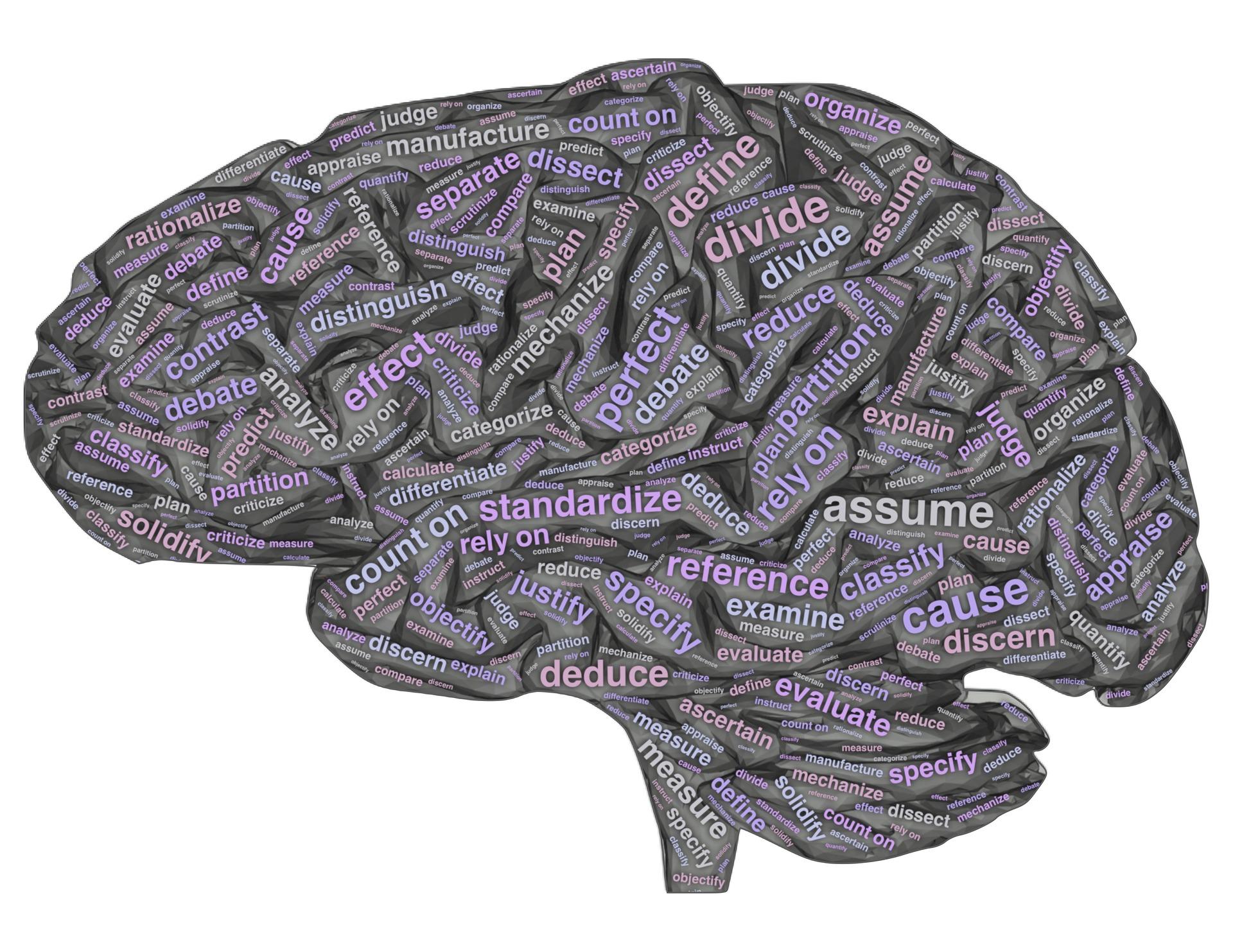 brain-4014126_1920